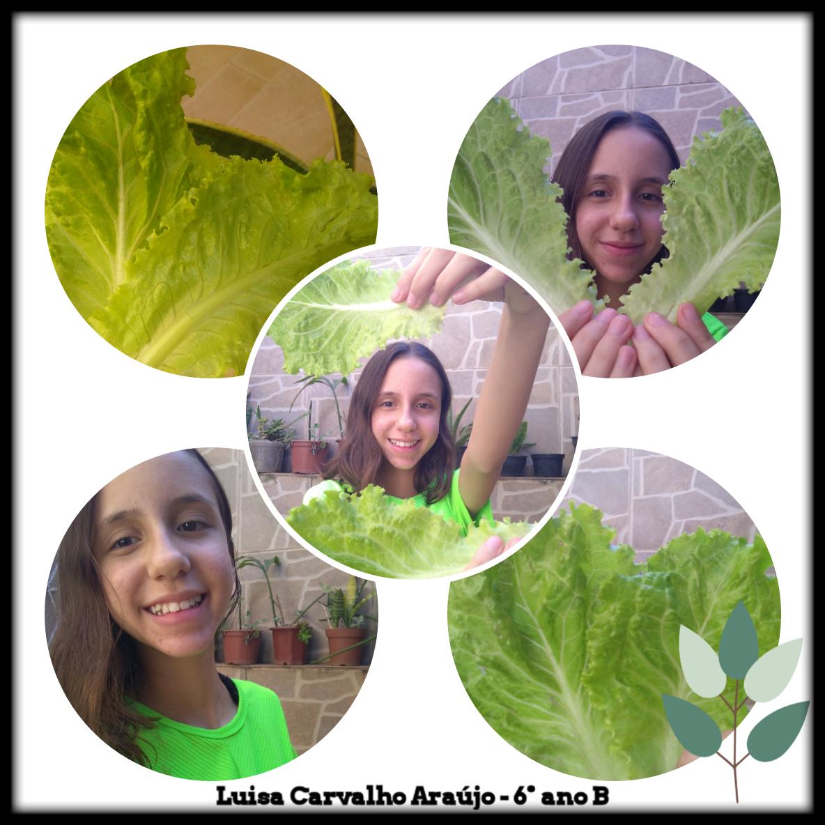 Hortas orgânicas: Saúde pessoal e ambiental