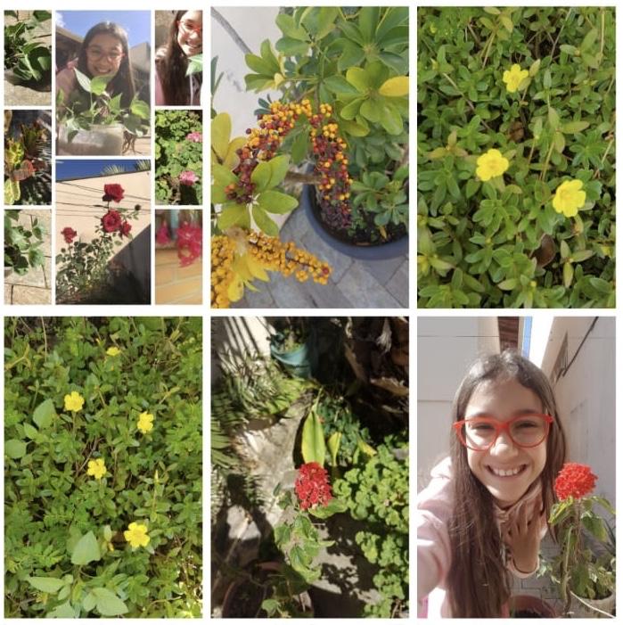 Entendendo a importância das hortas orgânicas